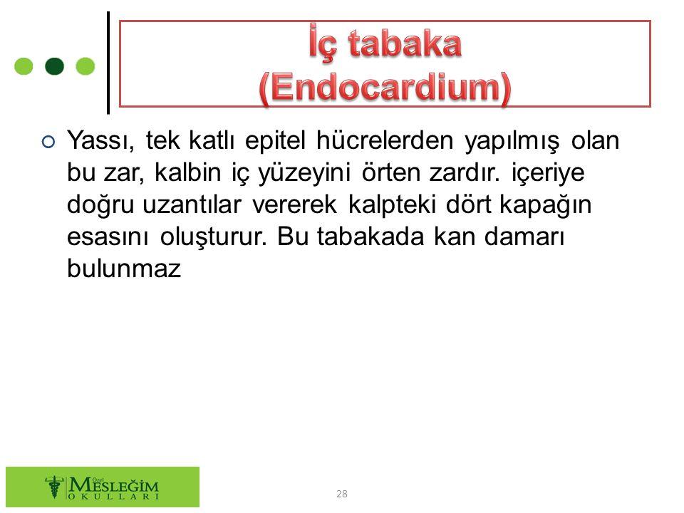 İç tabaka (Endocardium)