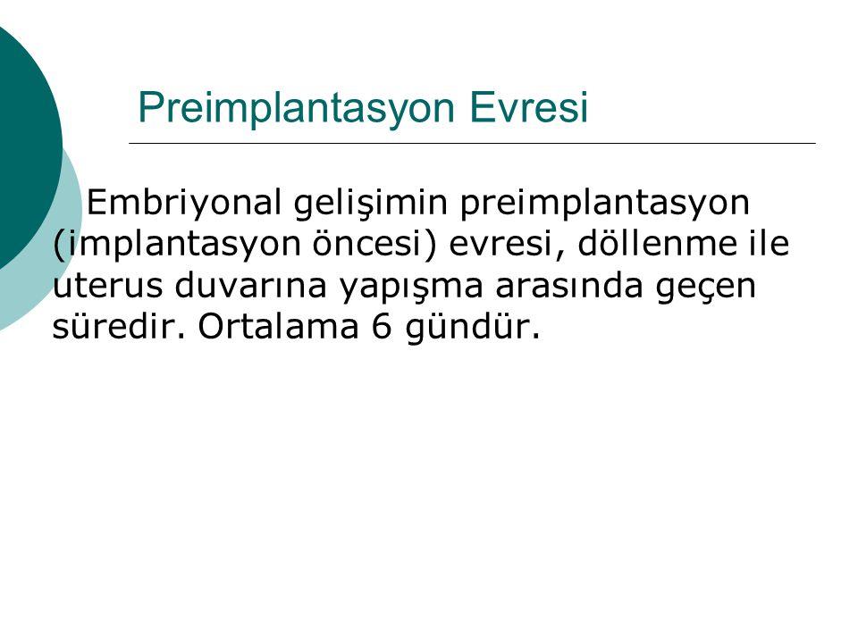 Preimplantasyon Evresi