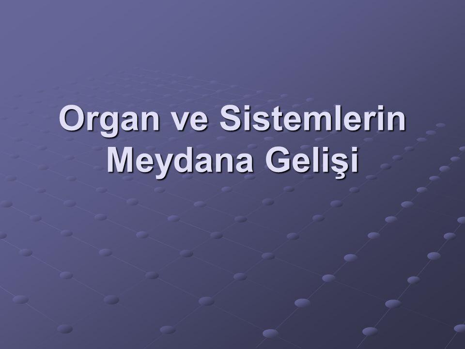Organ ve Sistemlerin Meydana Gelişi