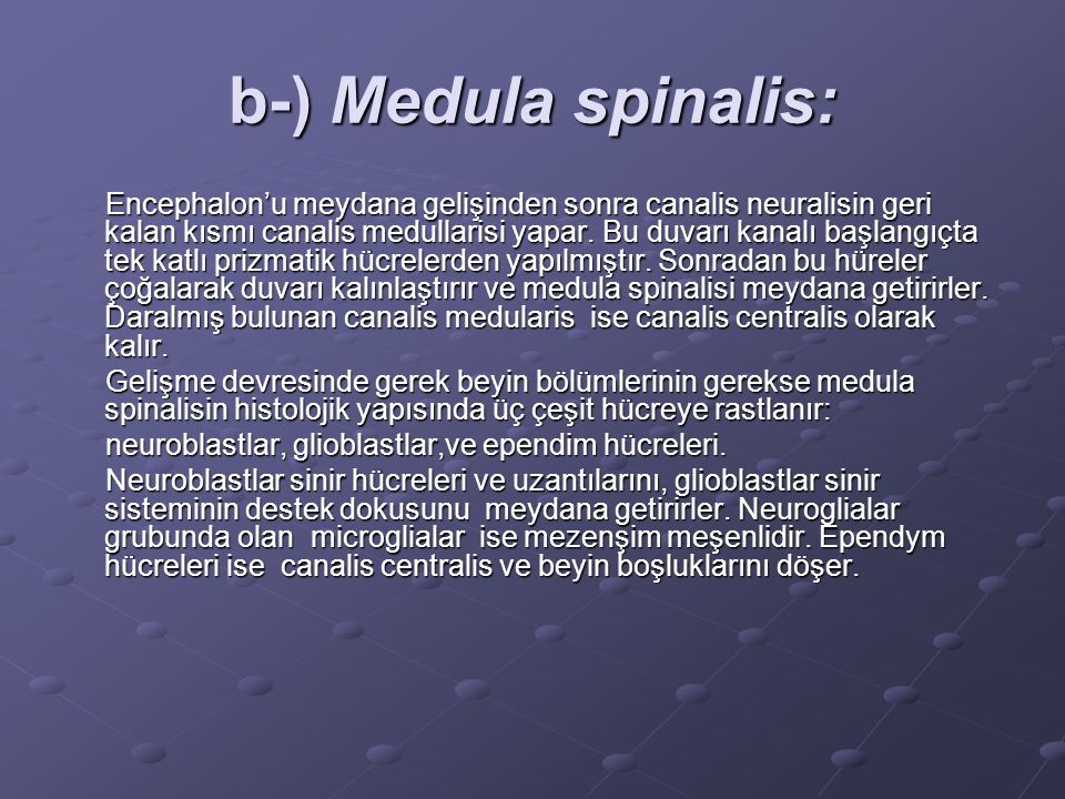 b-) Medula spinalis: