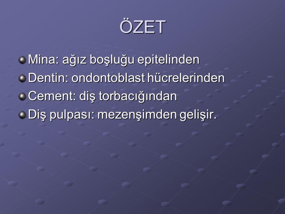 ÖZET Mina: ağız boşluğu epitelinden Dentin: ondontoblast hücrelerinden