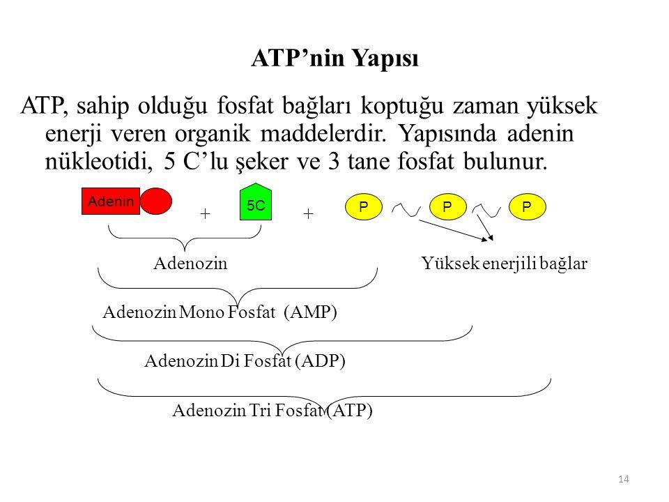 ATP'nin Yapısı