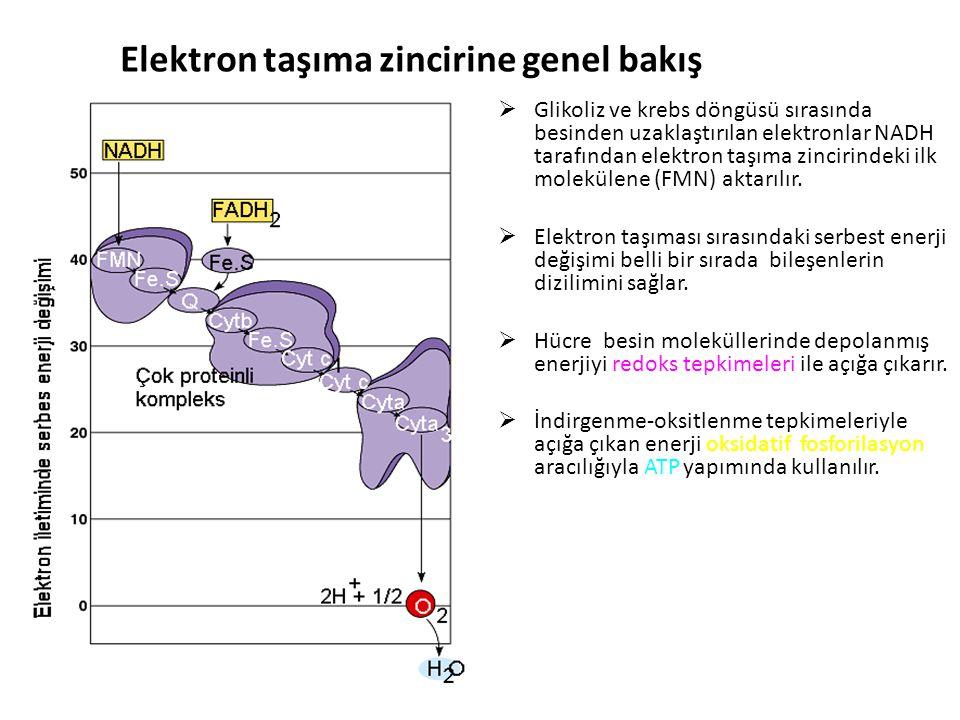 Elektron taşıma zincirine genel bakış