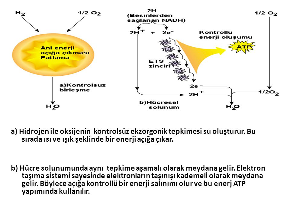 a) Hidrojen ile oksijenin kontrolsüz ekzorgonik tepkimesi su oluşturur