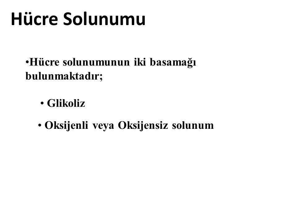 Hücre Solunumu Hücre solunumunun iki basamağı bulunmaktadır; Glikoliz