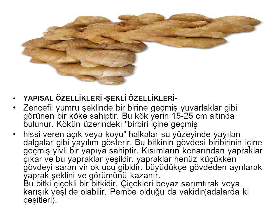 YAPISAL ÖZELLİKLERİ -ŞEKLİ ÖZELLİKLERİ-