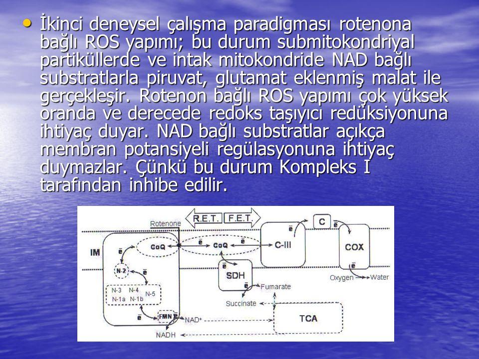İkinci deneysel çalışma paradigması rotenona bağlı ROS yapımı; bu durum submitokondriyal partiküllerde ve intak mitokondride NAD bağlı substratlarla piruvat, glutamat eklenmiş malat ile gerçekleşir.