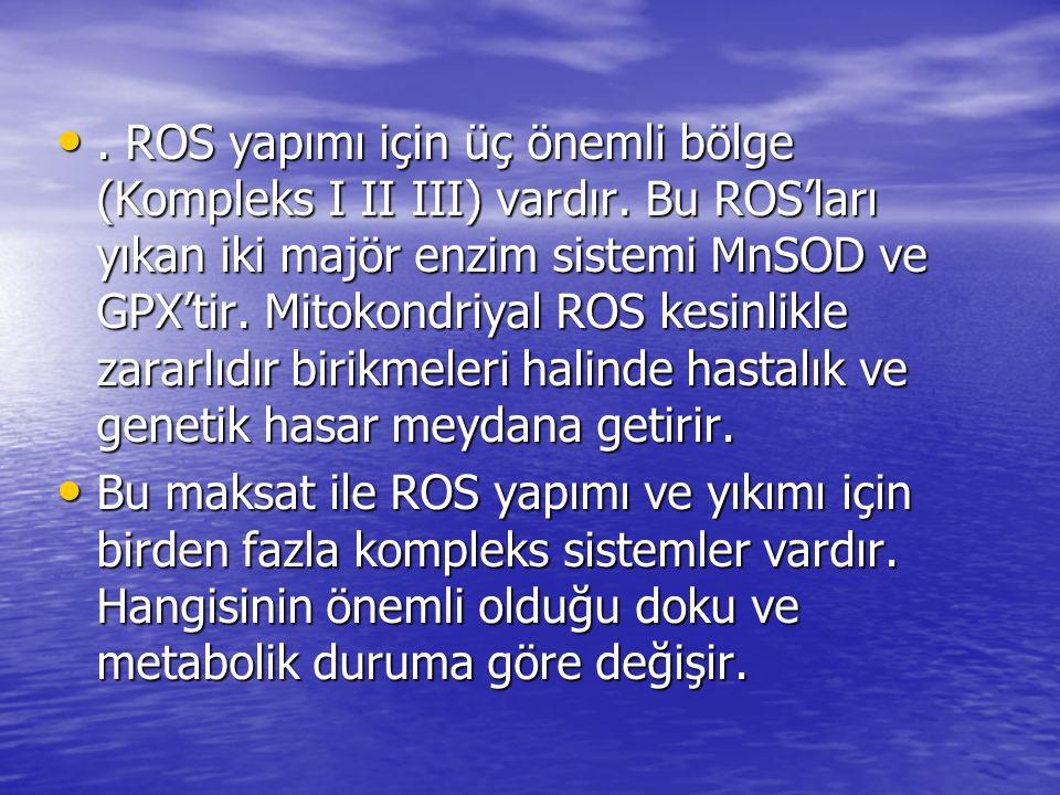ROS yapımı için üç önemli bölge (Kompleks I II III) vardır