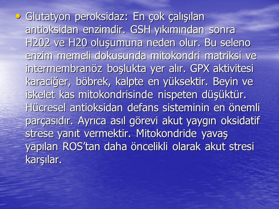 Glutatyon peroksidaz: En çok çalışılan antioksidan enzimdir