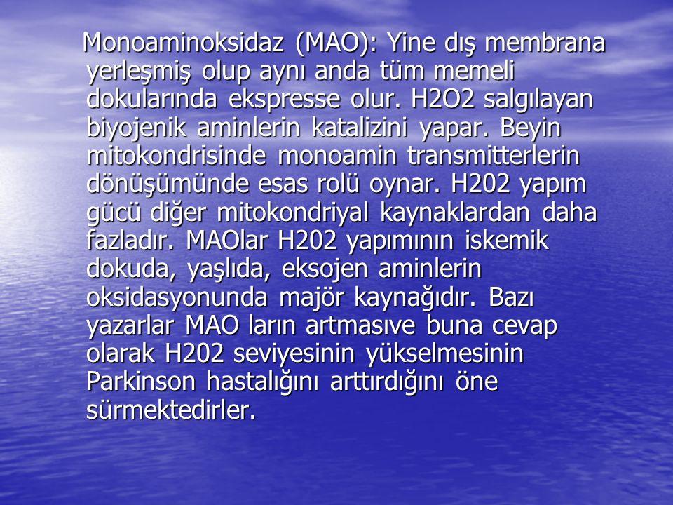 Monoaminoksidaz (MAO): Yine dış membrana yerleşmiş olup aynı anda tüm memeli dokularında ekspresse olur.