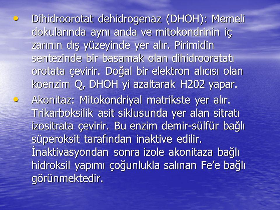 Dihidroorotat dehidrogenaz (DHOH): Memeli dokularında aynı anda ve mitokondrinin iç zarının dış yüzeyinde yer alır. Pirimidin sentezinde bir basamak olan dihidrooratatı orotata çevirir. Doğal bir elektron alıcısı olan koenzim Q, DHOH yi azaltarak H202 yapar.