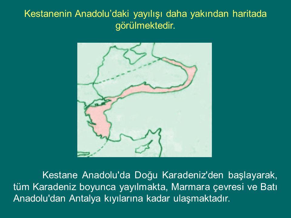 Kestanenin Anadolu'daki yayılışı daha yakından haritada görülmektedir.