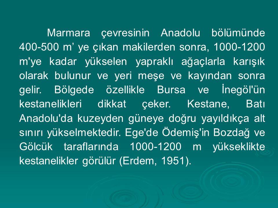Marmara çevresinin Anadolu bölümünde 400-500 m' ye çıkan makilerden sonra, 1000-1200 m ye kadar yükselen yapraklı ağaçlarla karışık olarak bulunur ve yeri meşe ve kayından sonra gelir.