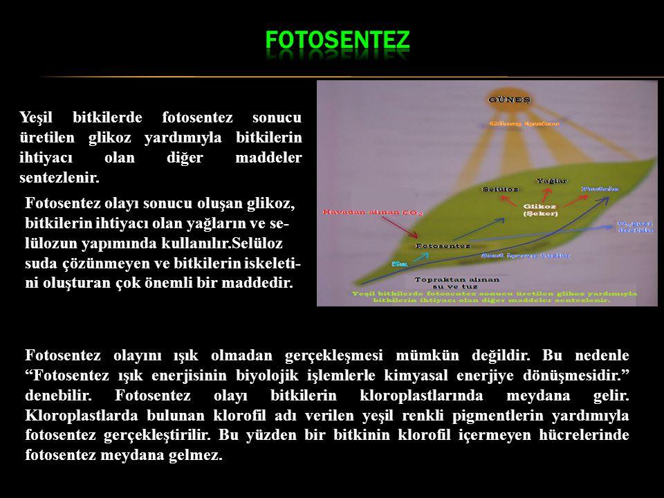 FOTOSENTEZ Yeşil bitkilerde fotosentez sonucu üretilen glikoz yardımıyla bitkilerin ihtiyacı olan diğer maddeler sentezlenir.