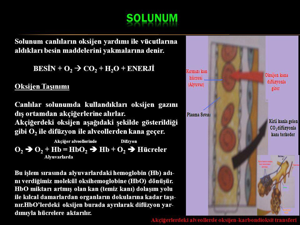 Akçiğerlerdeki alveollerde oksijen-karbondioksit transferi