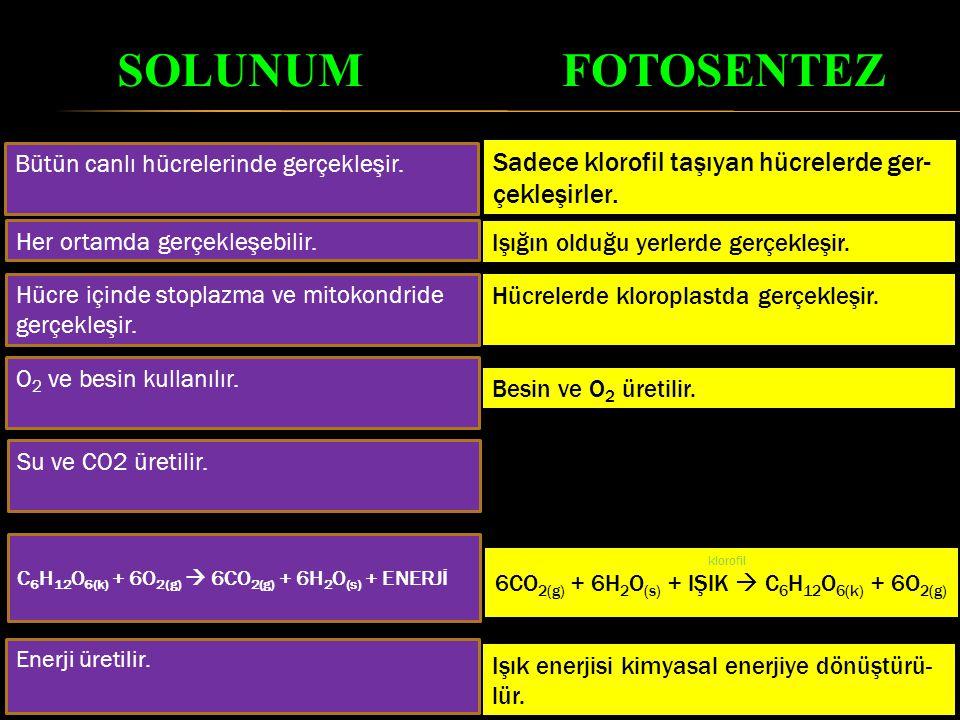 SOLUNUM FOTOSENTEZ Sadece klorofil taşıyan hücrelerde ger-çekleşirler.