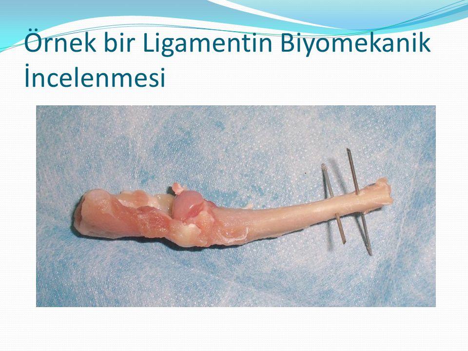 Örnek bir Ligamentin Biyomekanik İncelenmesi