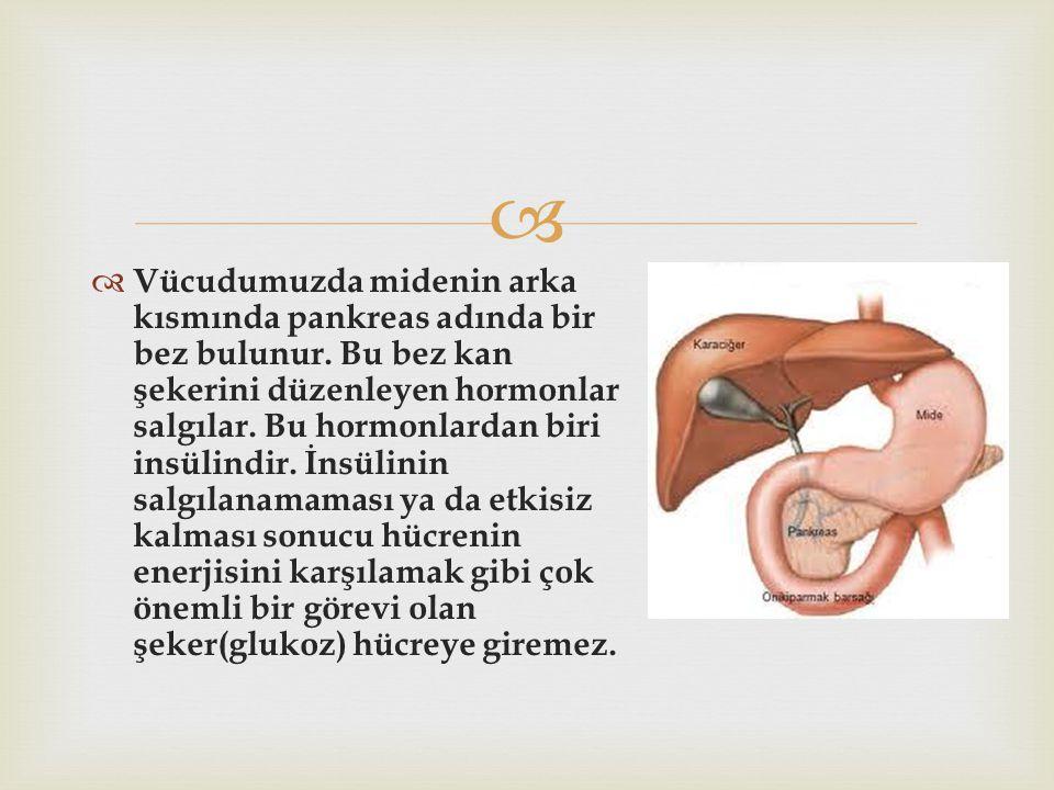 Vücudumuzda midenin arka kısmında pankreas adında bir bez bulunur