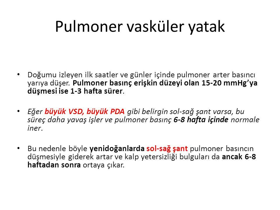 Pulmoner vasküler yatak