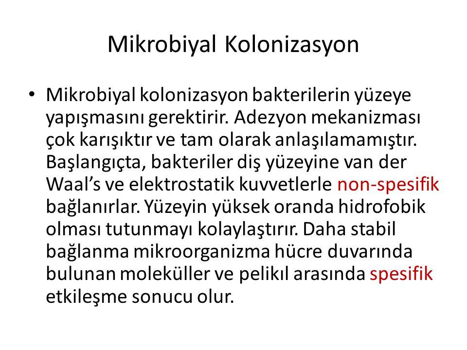 Mikrobiyal Kolonizasyon