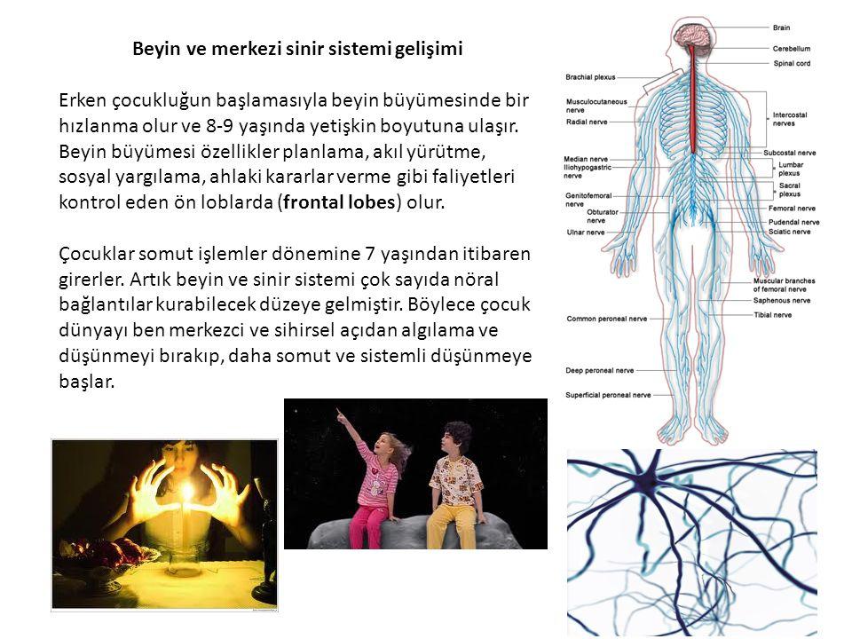 Beyin ve merkezi sinir sistemi gelişimi