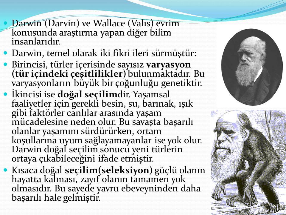 Darwin (Darvin) ve Wallace (Valıs) evrim konusunda araştırma yapan diğer bilim insanlarıdır.