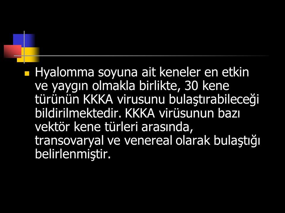 Hyalomma soyuna ait keneler en etkin ve yaygın olmakla birlikte, 30 kene türünün KKKA virusunu bulaştırabileceği bildirilmektedir.