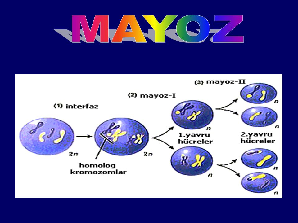 MAYOZ