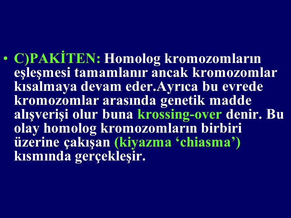 C)PAKİTEN: Homolog kromozomların eşleşmesi tamamlanır ancak kromozomlar kısalmaya devam eder.Ayrıca bu evrede kromozomlar arasında genetik madde alışverişi olur buna krossing-over denir.