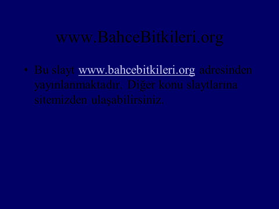 www.BahceBitkileri.org Bu slayt www.bahcebitkileri.org adresinden yayınlanmaktadır.