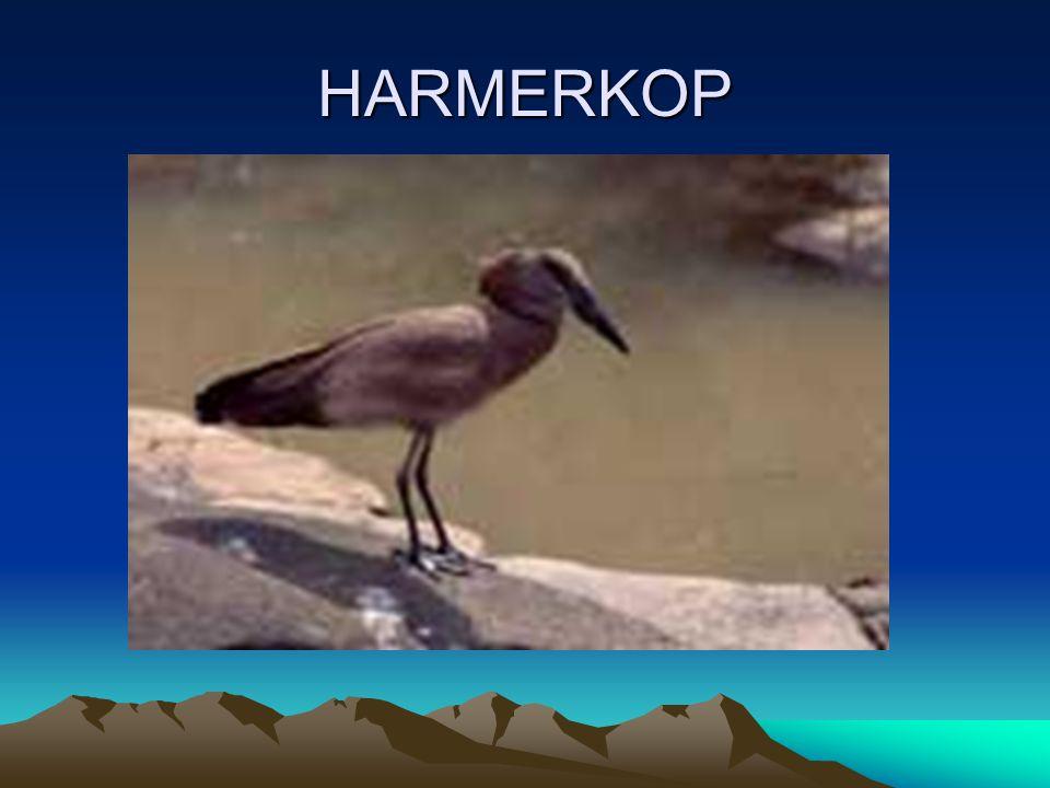 HARMERKOP
