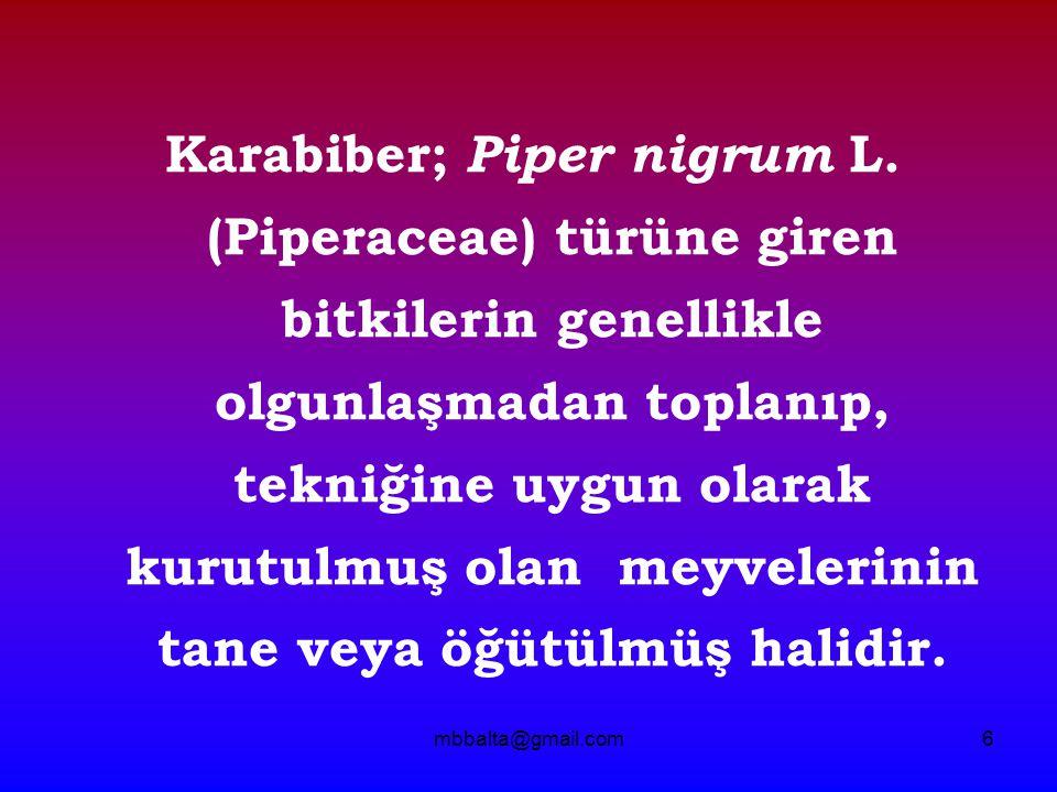 Karabiber; Piper nigrum L