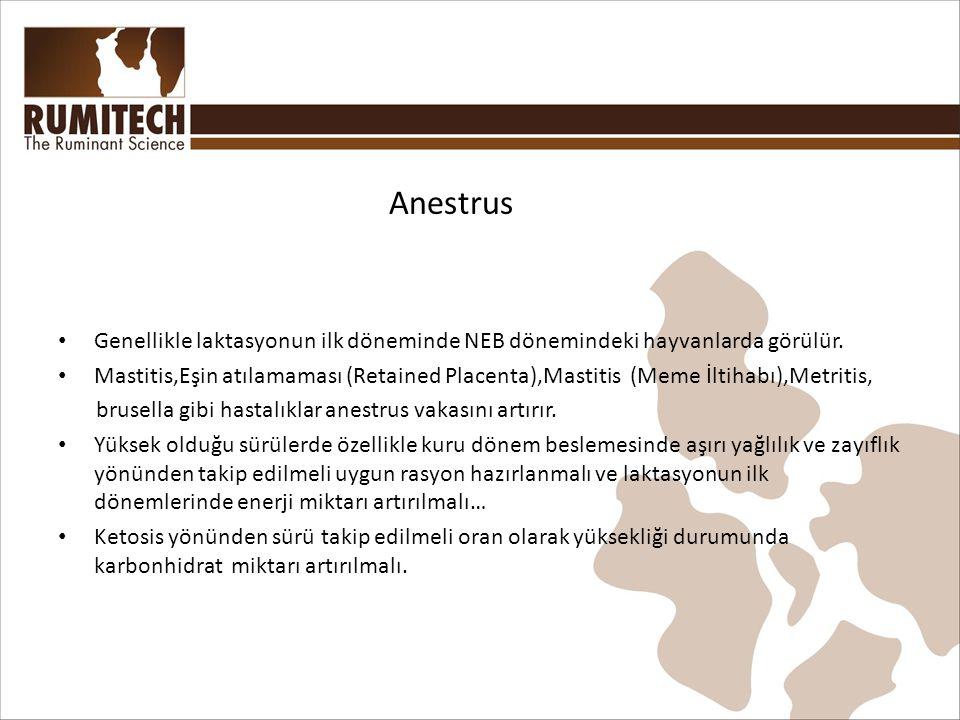 Anestrus Genellikle laktasyonun ilk döneminde NEB dönemindeki hayvanlarda görülür.