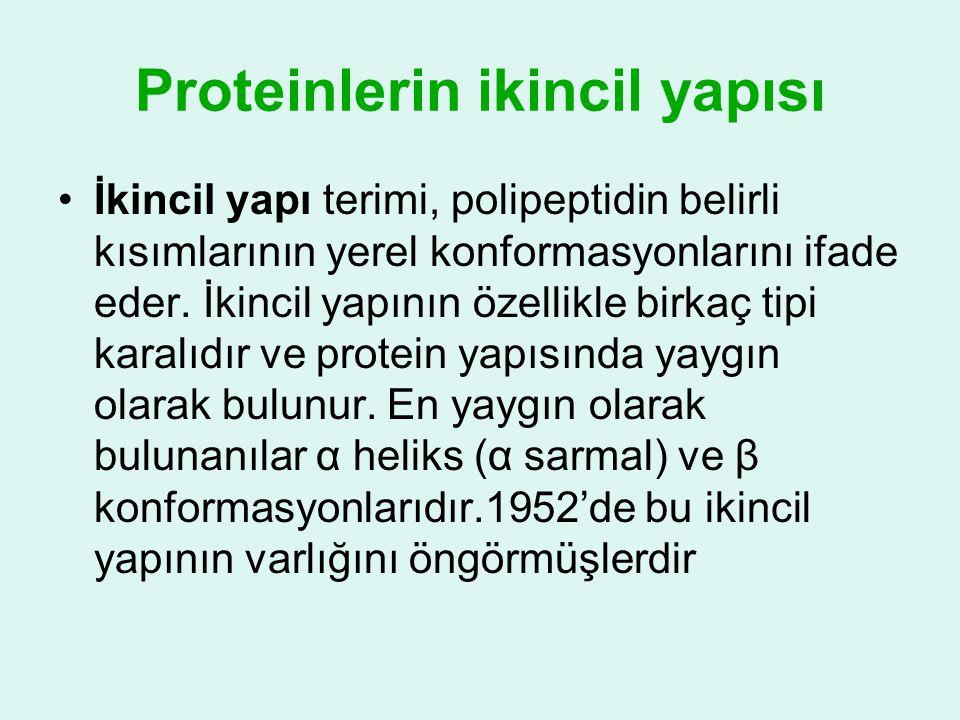Proteinlerin ikincil yapısı