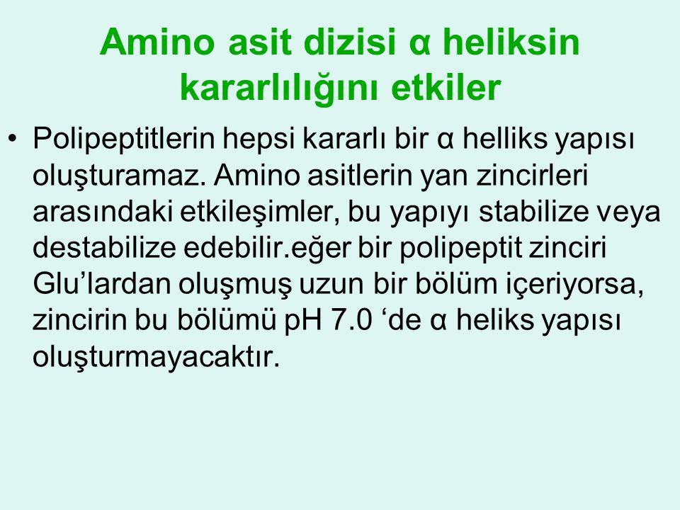 Amino asit dizisi α heliksin kararlılığını etkiler