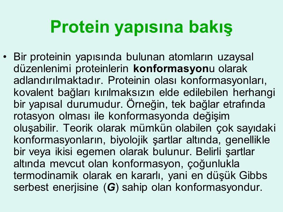 Protein yapısına bakış