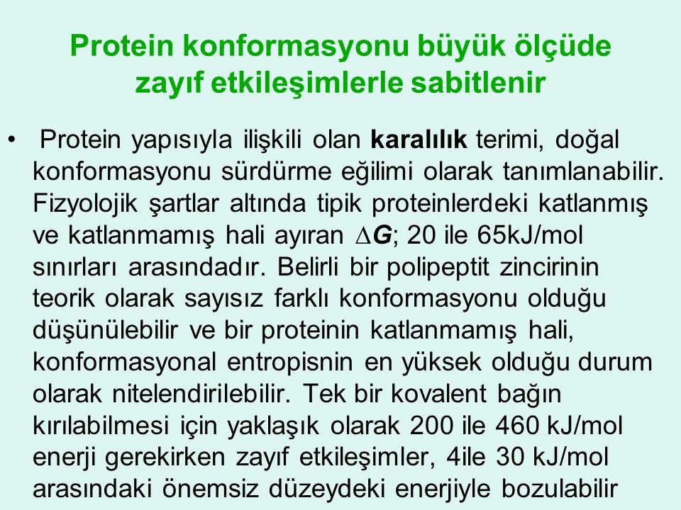 Protein konformasyonu büyük ölçüde zayıf etkileşimlerle sabitlenir