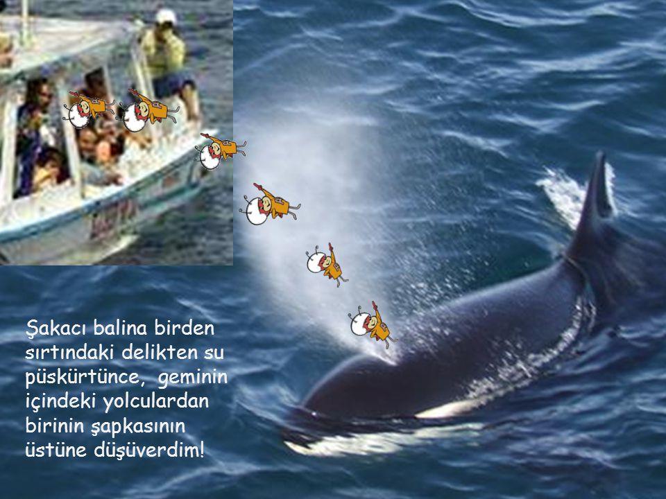 Şakacı balina birden sırtındaki delikten su püskürtünce, geminin içindeki yolculardan birinin şapkasının üstüne düşüverdim!