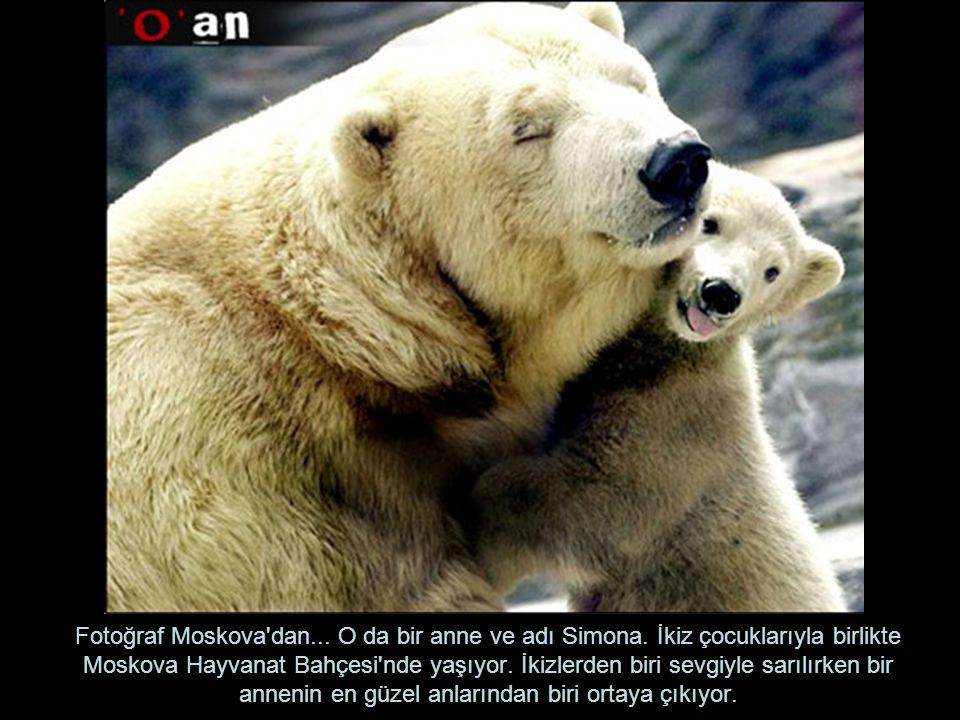 Fotoğraf Moskova dan. O da bir anne ve adı Simona