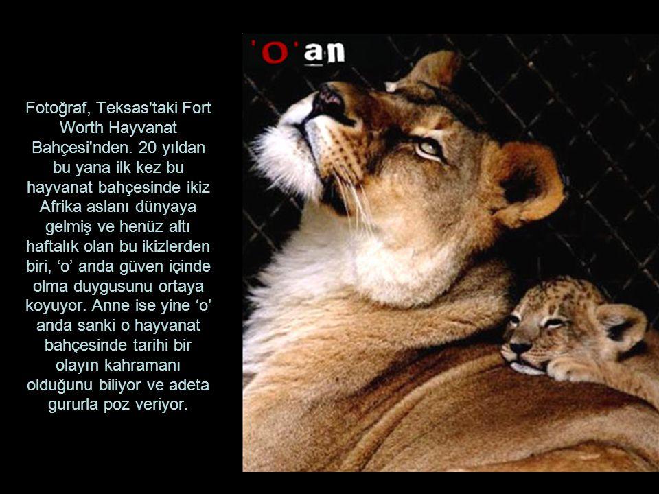 Fotoğraf, Teksas taki Fort Worth Hayvanat Bahçesi nden