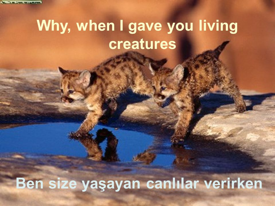 Why, when I gave you living creatures