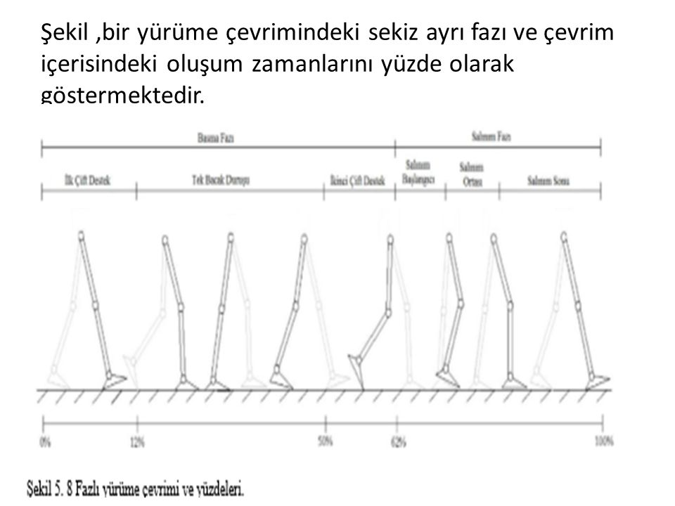 Şekil ,bir yürüme çevrimindeki sekiz ayrı fazı ve çevrim içerisindeki oluşum zamanlarını yüzde olarak göstermektedir.