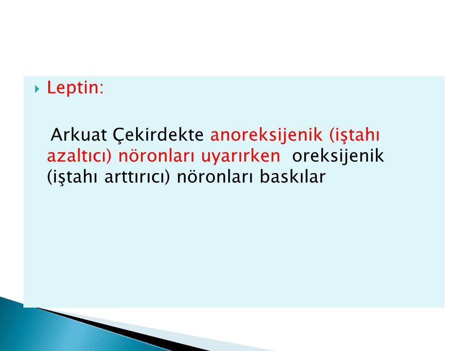 Leptin: Arkuat Çekirdekte anoreksijenik (iştahı azaltıcı) nöronları uyarırken oreksijenik (iştahı arttırıcı) nöronları baskılar.