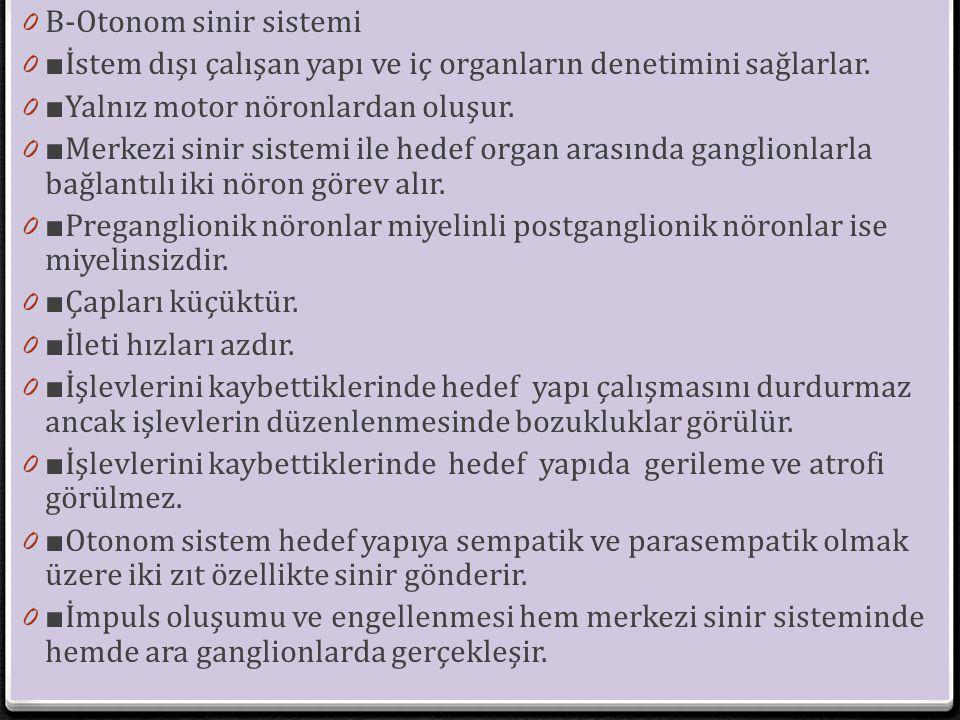 B-Otonom sinir sistemi