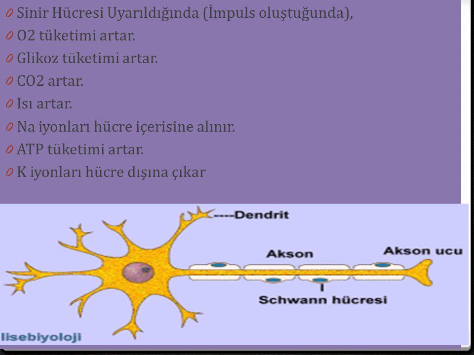 Sinir Hücresi Uyarıldığında (İmpuls oluştuğunda),