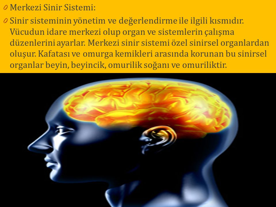 Merkezi Sinir Sistemi: