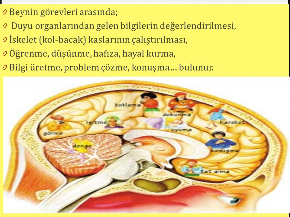 Beynin görevleri arasında;