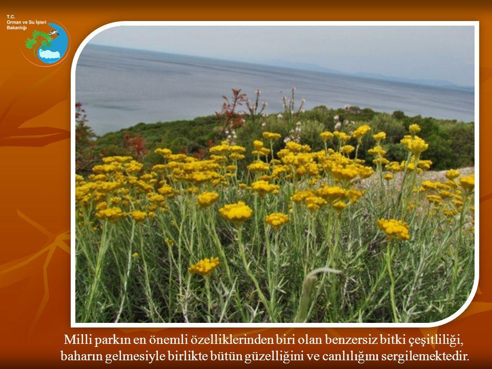 Milli parkın en önemli özelliklerinden biri olan benzersiz bitki çeşitliliği,