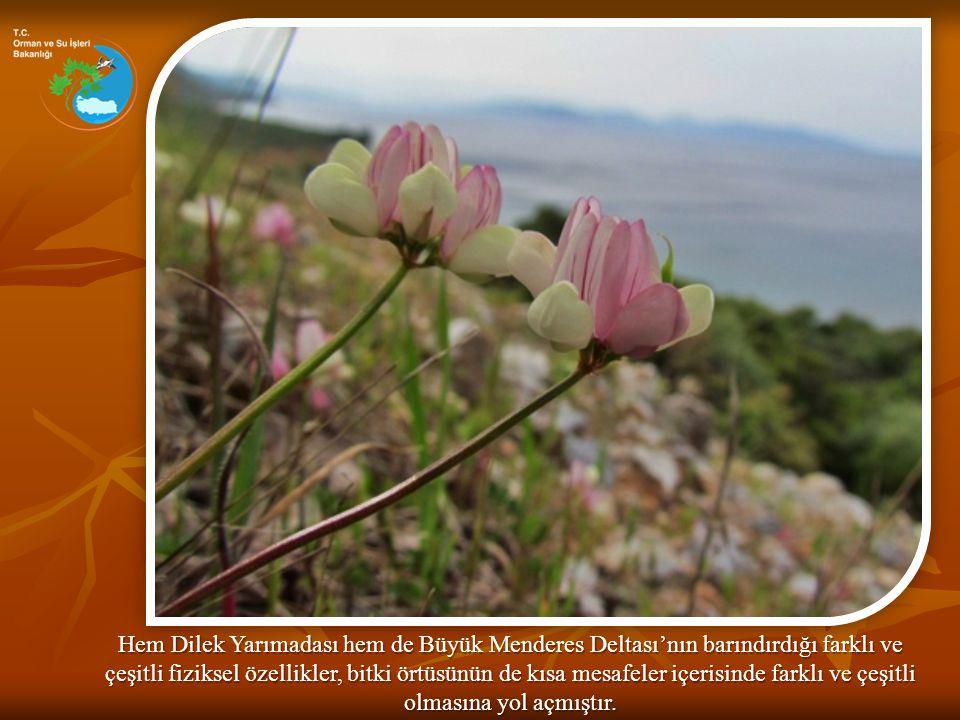 Hem Dilek Yarımadası hem de Büyük Menderes Deltası'nın barındırdığı farklı ve çeşitli fiziksel özellikler, bitki örtüsünün de kısa mesafeler içerisinde farklı ve çeşitli olmasına yol açmıştır.