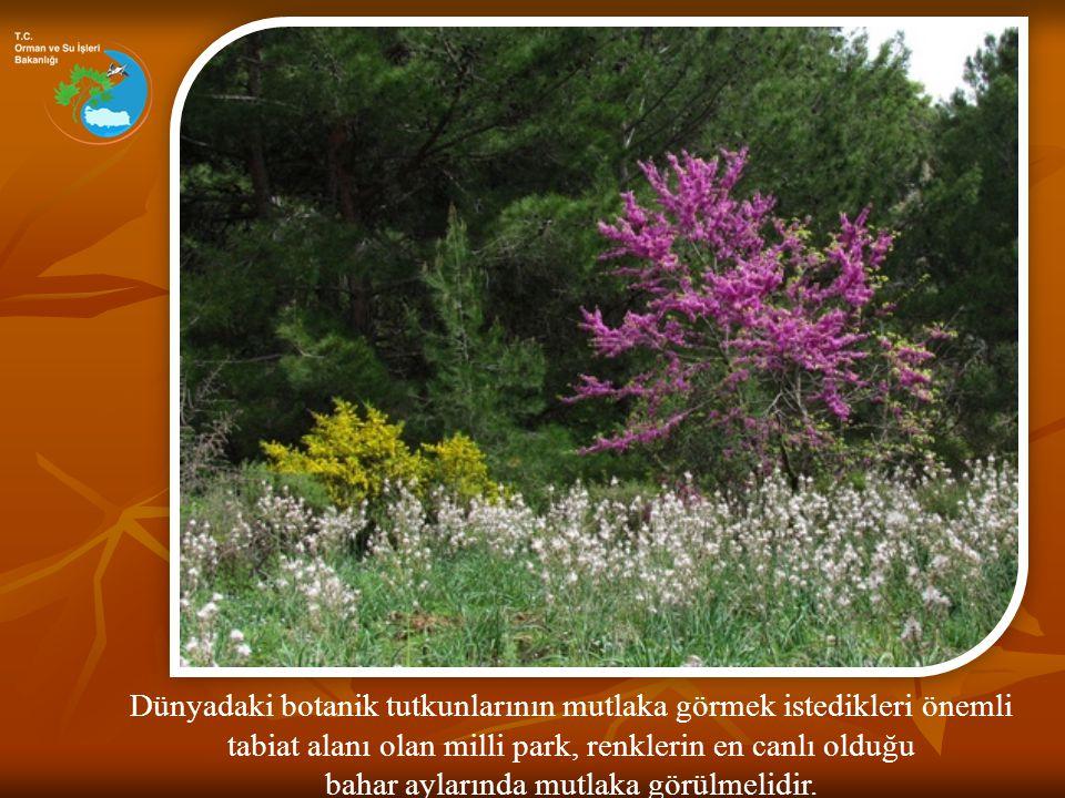 Dünyadaki botanik tutkunlarının mutlaka görmek istedikleri önemli